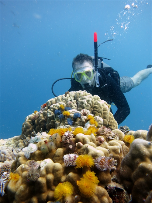 Open Water Diver Referal